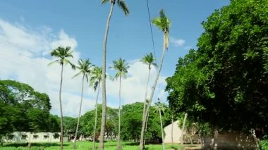 Coconut Trees With House In The Background In The India