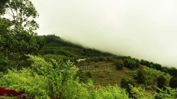 Mraky projít přes hory. Zelené kopce se stromy v cloudu zbytky. Pohyblivé mlha nad stromy. Mlha řítí přes horský hřeben