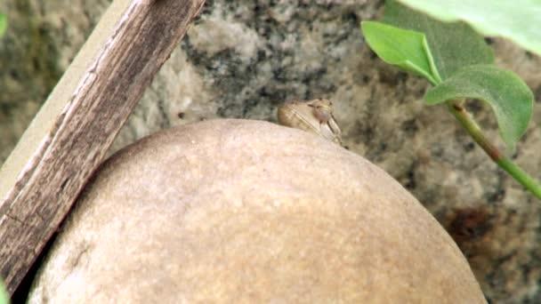 Detail ještěrka v přírodě