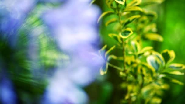 Přesun zaměření fialové květy na zelené listy v krásné zahradě