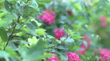 Pink Flower Shift Of Focuses Shot