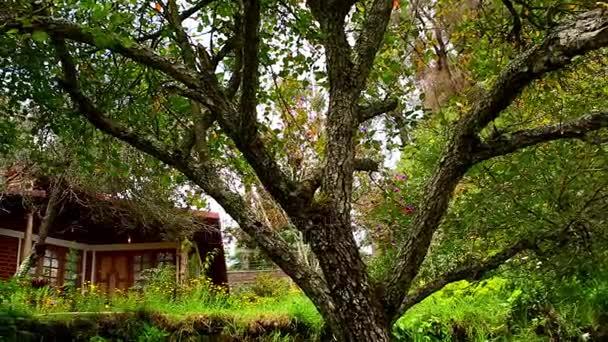 Külső ház kert - jobb panorámafelvétel szemcsésedik