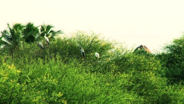 Ptáci sedící na stromě, létající ptáci