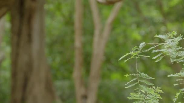 Zöld levelek a fák ágain. Gyönyörű hegyi erdő.