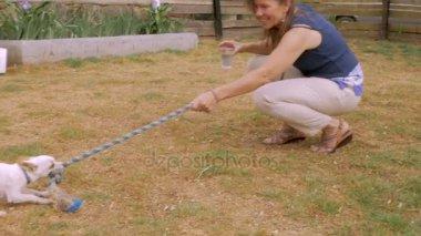 Játék kötélhúzás chihuahua férfi kutyájával, vonzó nő