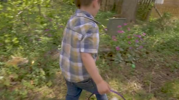 Camera follows a young cute 4 - 5 year old boy finding an easter egg
