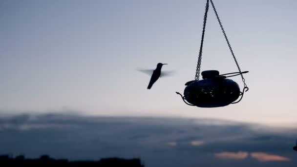 Silueta kolibřík jíst při západu slunce na krmítko kolibříků