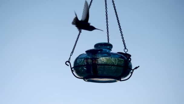 Siluety dvou kolibříci krmení a létání za soumraku nebo svítání