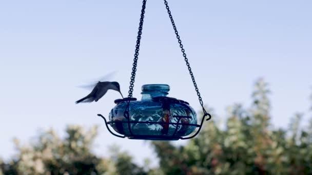 Fialovou korunu kolibřík létání, jíst a polykání na podavač
