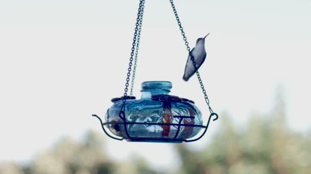 Fialový koruny kolibřík posazený a krmení na sklo podavač