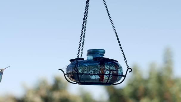 Fialovou korunu kolibřík letí do rámečku a jí na podavač