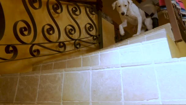 Muž a jeho pes šel po dlážděné točité schody kolem kamery