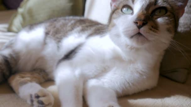 Krásné zdravé kočku vleže, vrní a volný přístup k fotoaparátu