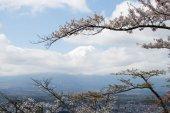 Monte Fuji che è il punto di riferimento famoso in Giappone con la nuvola bianca e fiore di sakura come primo piano su sfondo blu cielo