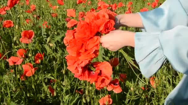 Young beautiful girl weaves a bouquet of poppies with a poppy field on a sunny summer day