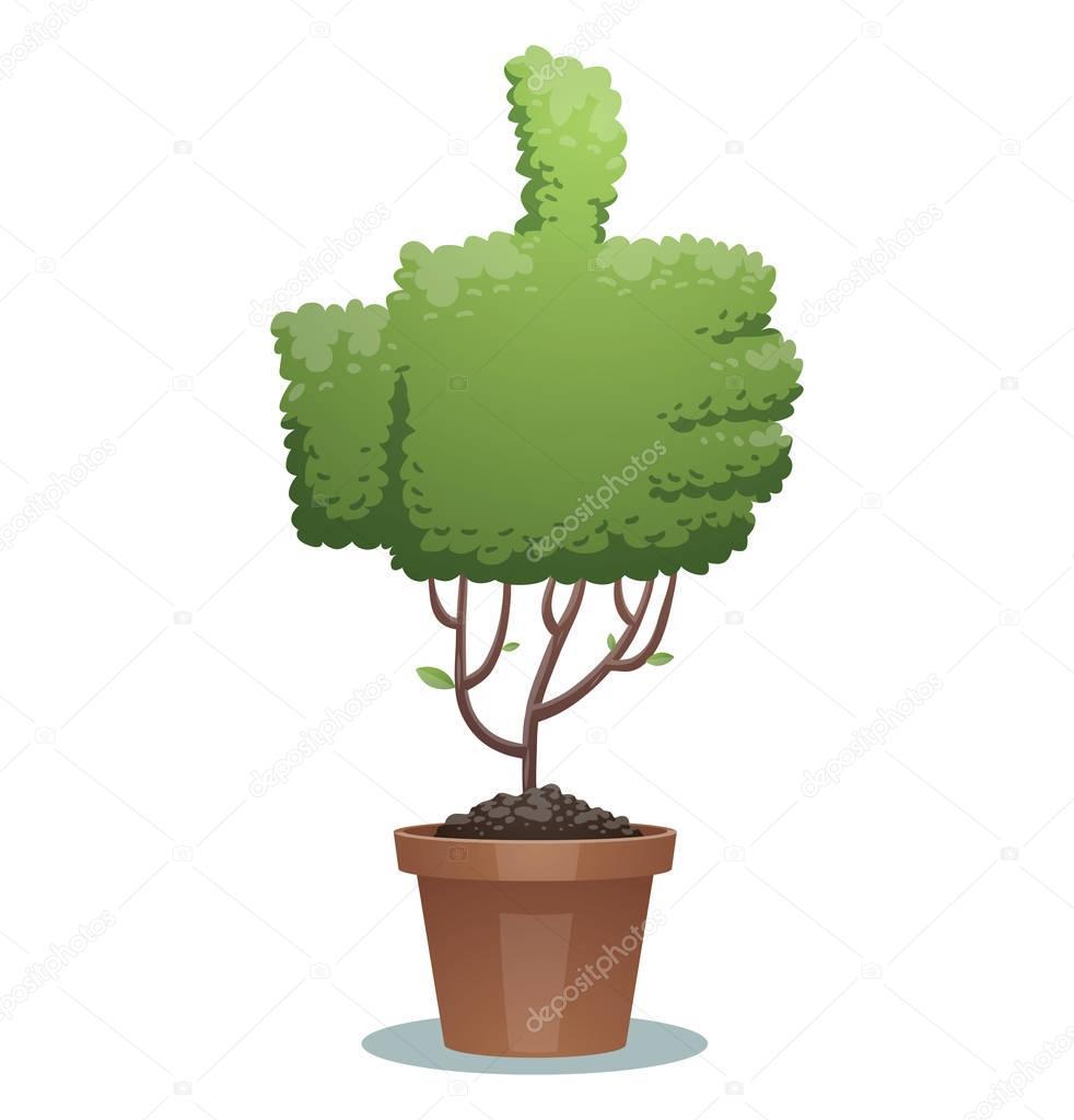 Green bonsai tree, thumb up