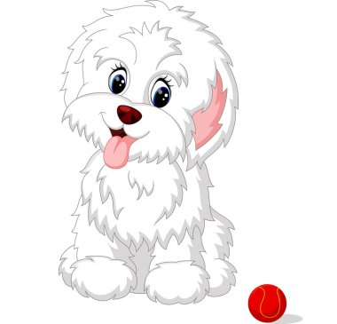 Cute white lap-dog puppy posing