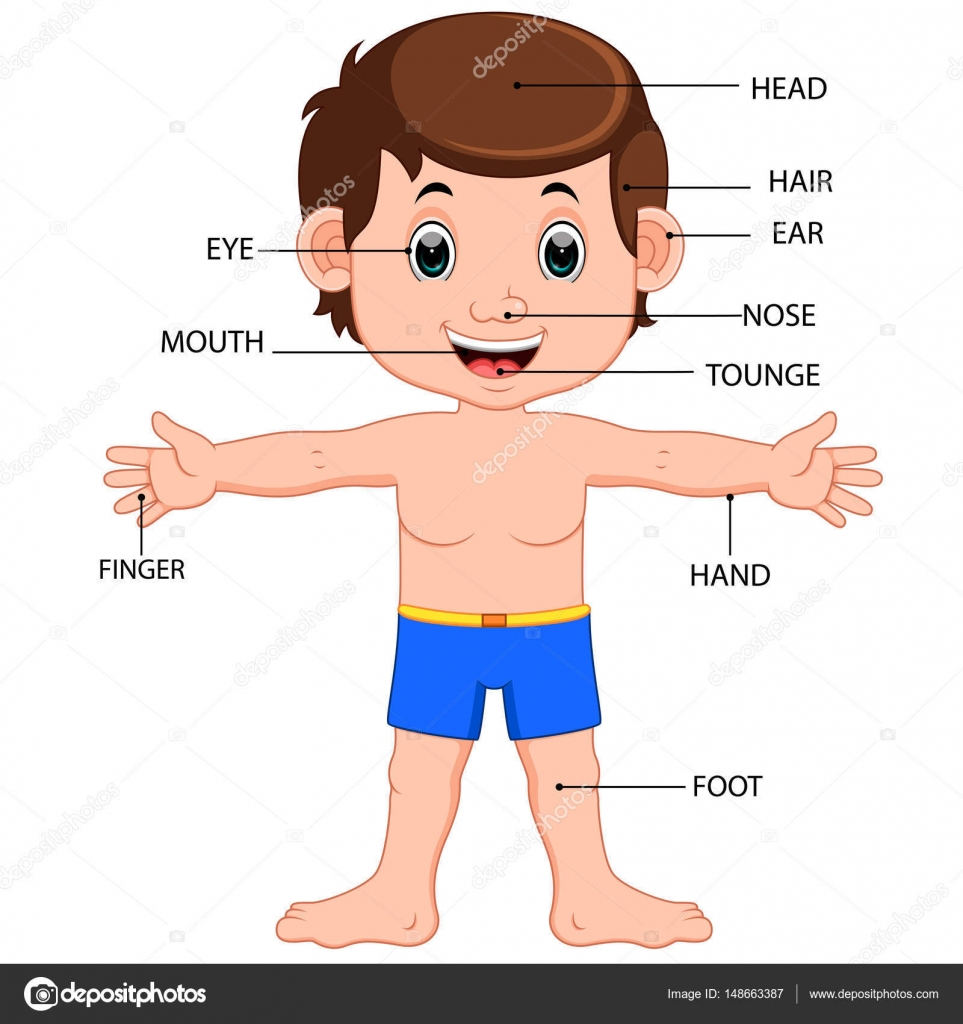 Boy body parts diagram poster stock vector hermandesign2015 boy body parts diagram poster stock vector ccuart Choice Image
