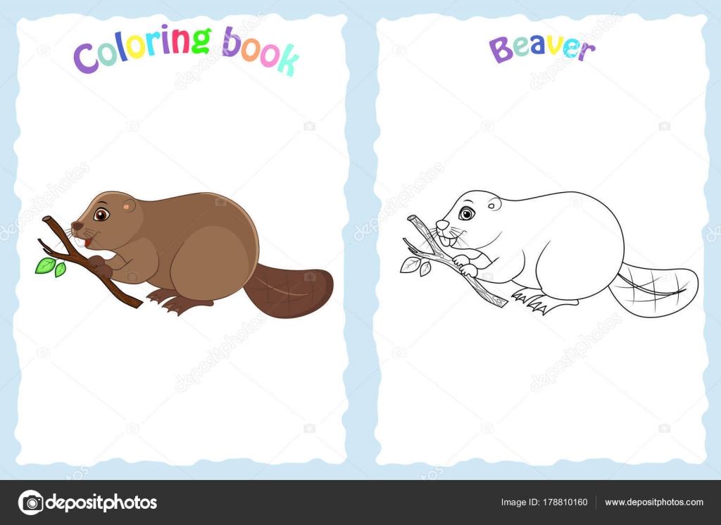 Libro de colorear para niños preescolar con colores Castor — Archivo ...