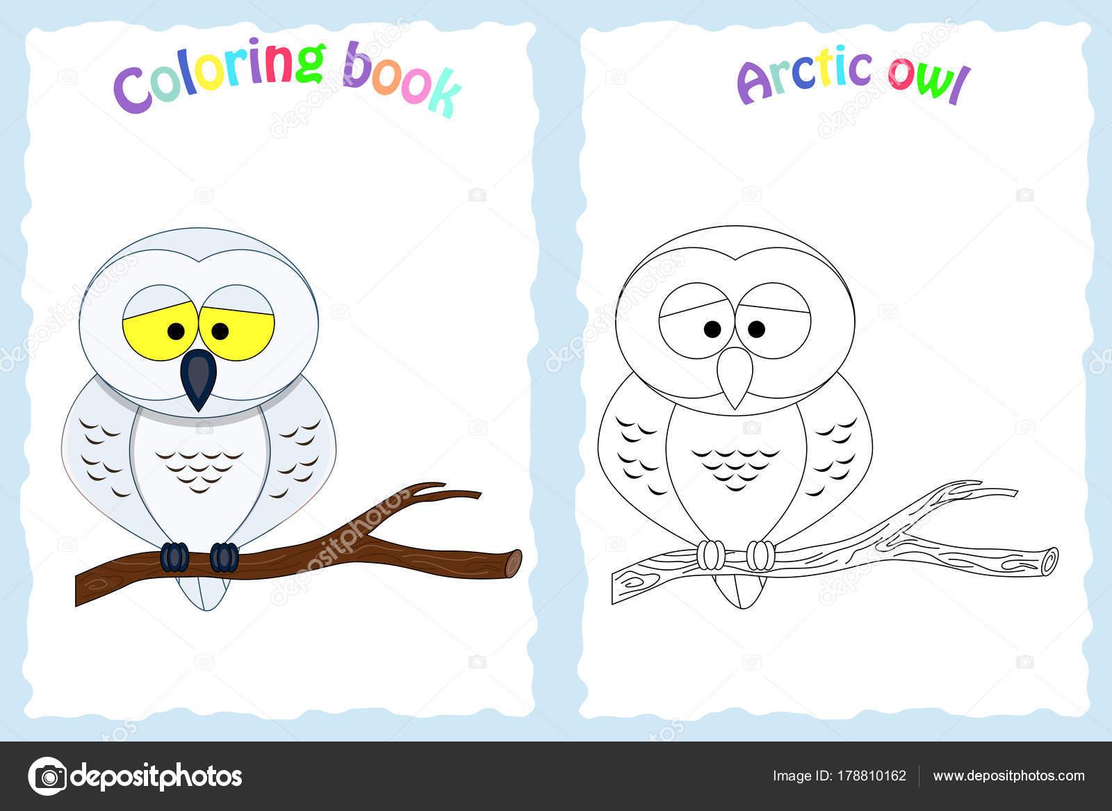Renkli Baykuş Boyama Kitabı Sayfası Stok Vektör Budolga 178810162