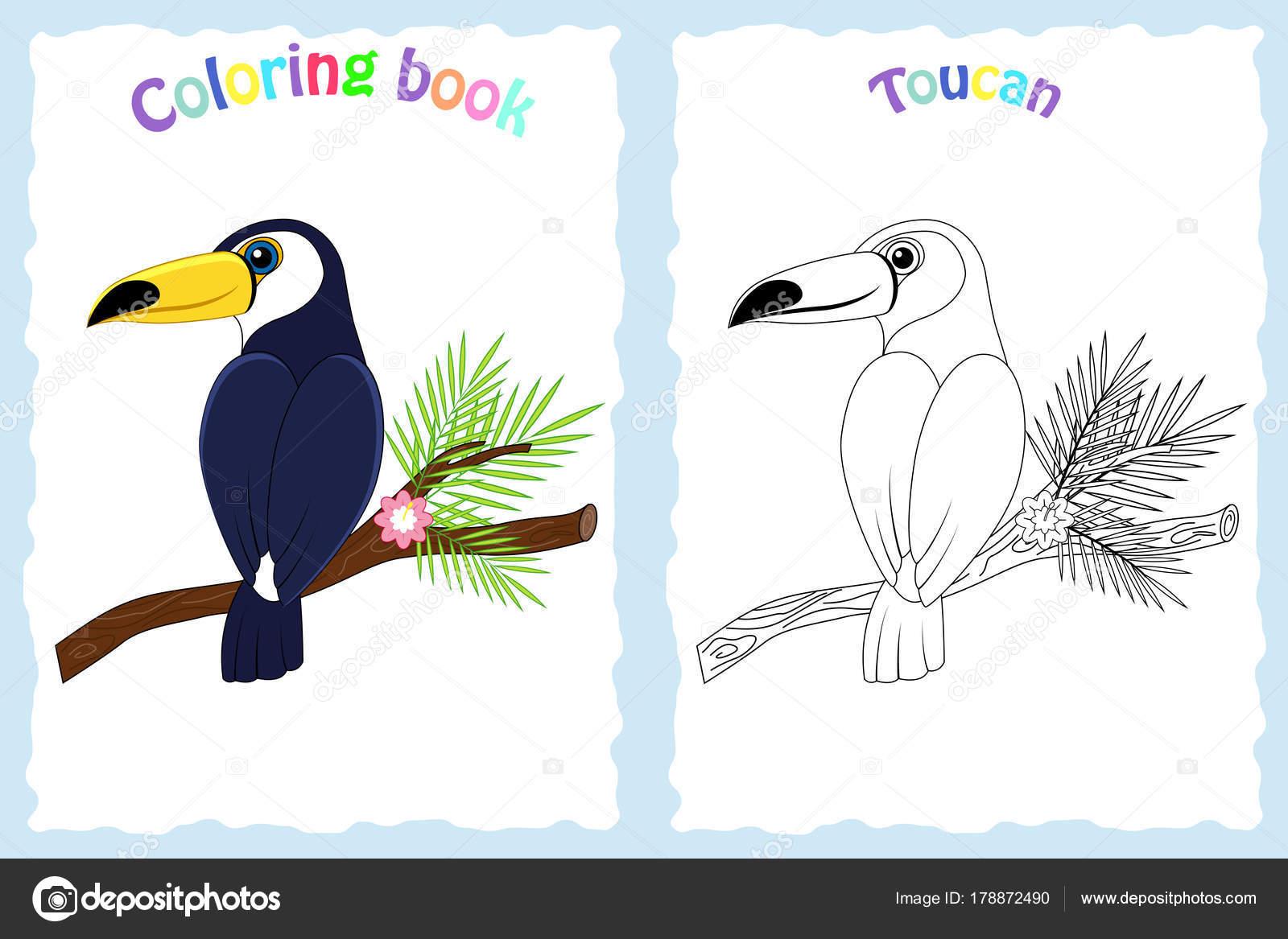 Buch-Malvorlagen für Kinder im Vorschulalter mit bunten Tukan ...
