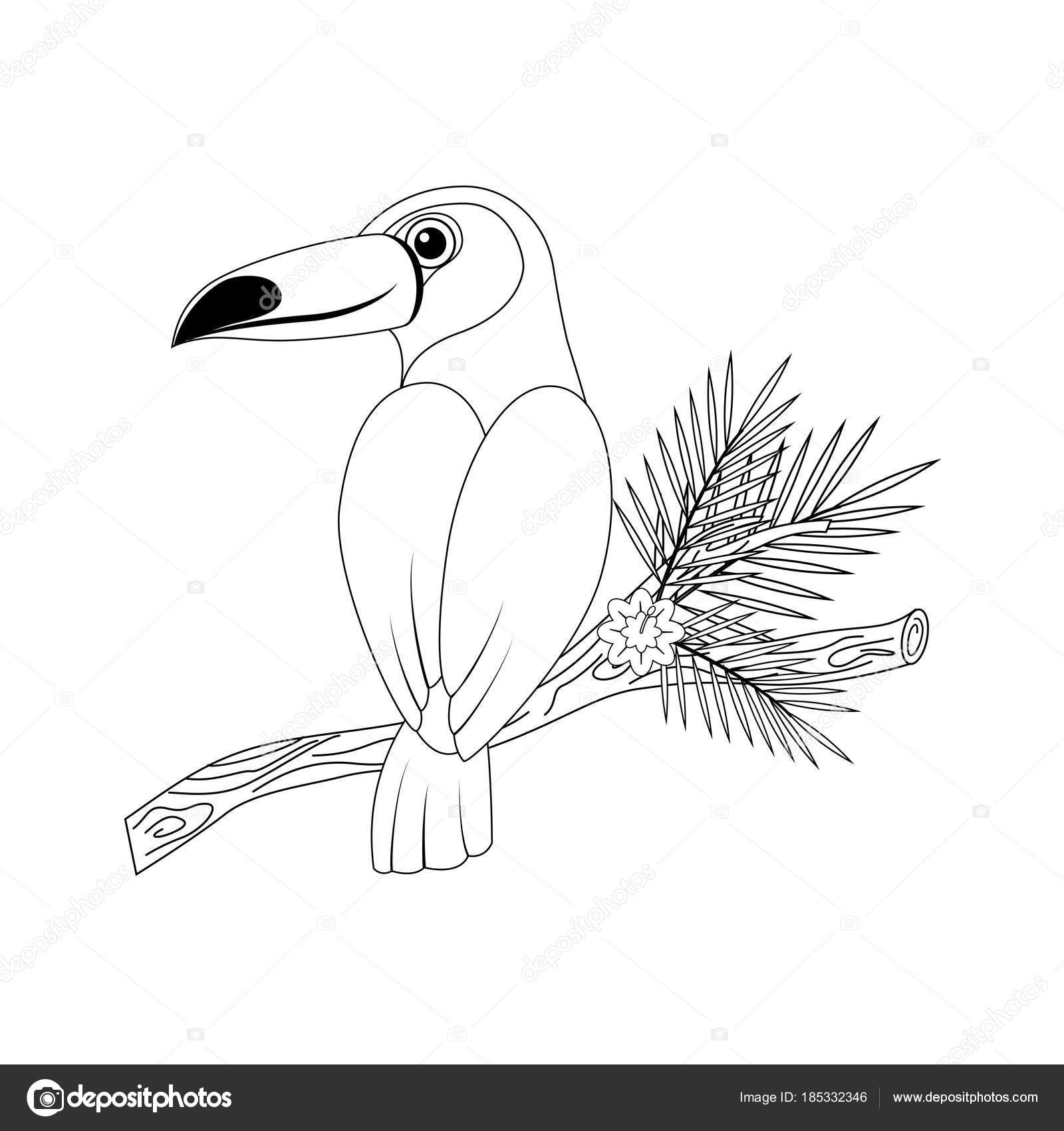 Colorless Funny Cartoon Toucan Vector Illustration Coloring Pa