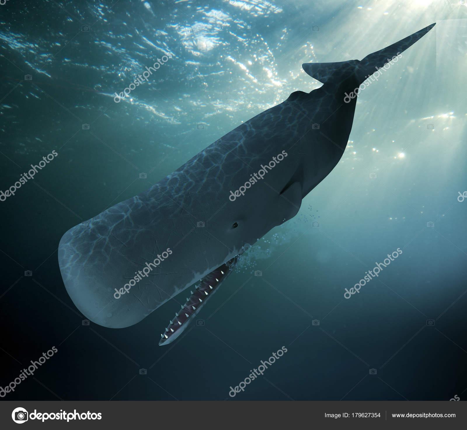 Sperm whale diving 10