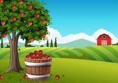 Fotografia Cesto di mele nel paesaggio dellazienda agricola allautunno e Melo