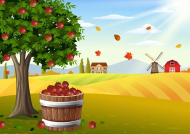 Apple tree and basket of apples in farm landscape at autumn