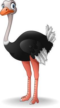 Cute ostrich cartoon