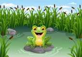 Cute frog on the rock