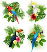 Photo Tropical flower and bird collection set