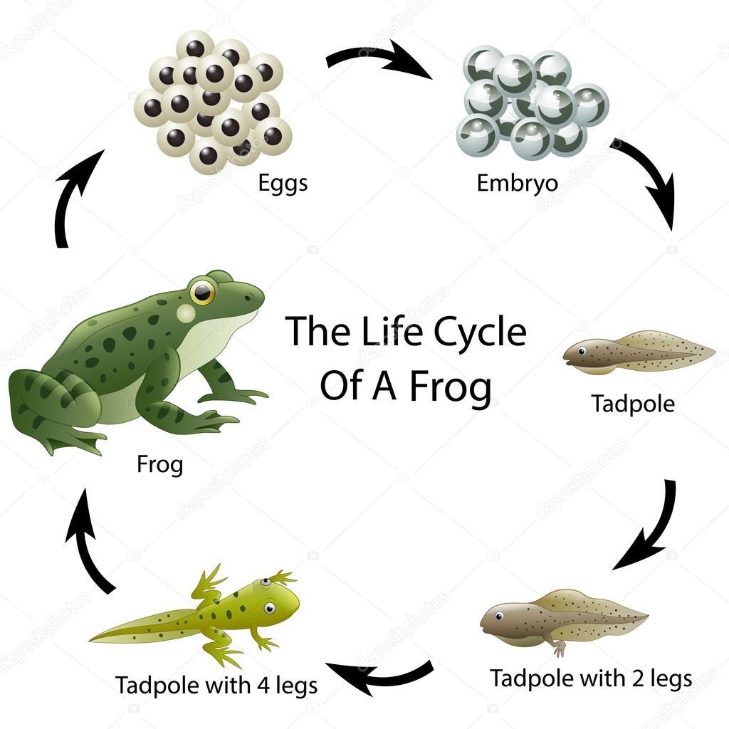 Biological life cycle