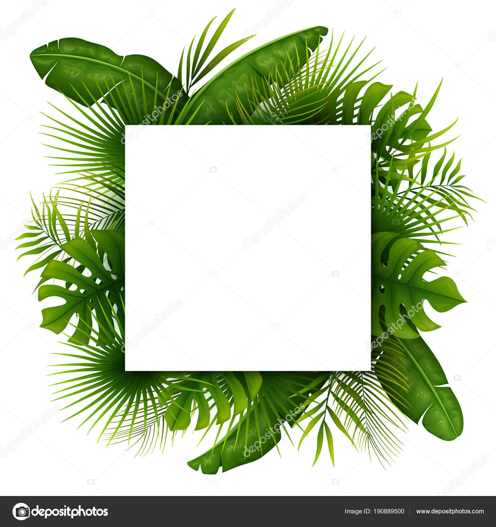 Tropical Green Leaves White Square Frame Place Text Isolated White Stock Vector C Dreamcreation01 190889500 If you are interested in. https depositphotos com 190889500 stock illustration tropical green leaves white square html