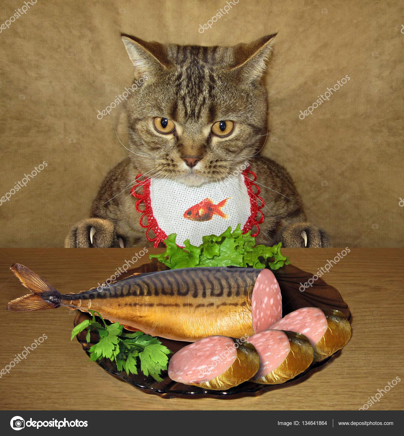 Кошка и колбаса картинки, стоковые фото Кошка и колбаса | Depositphotos