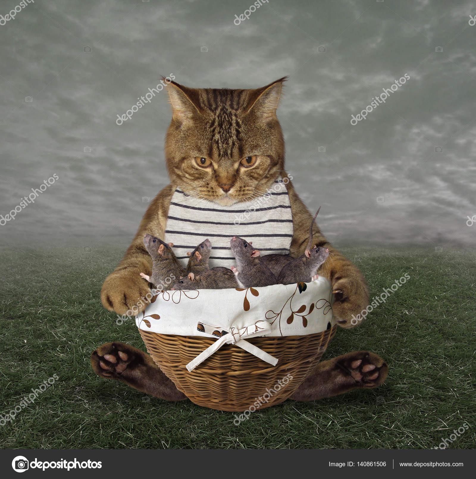 Il Gatto E Un Cesto Con I Topi Foto Stock Iridi 140861506