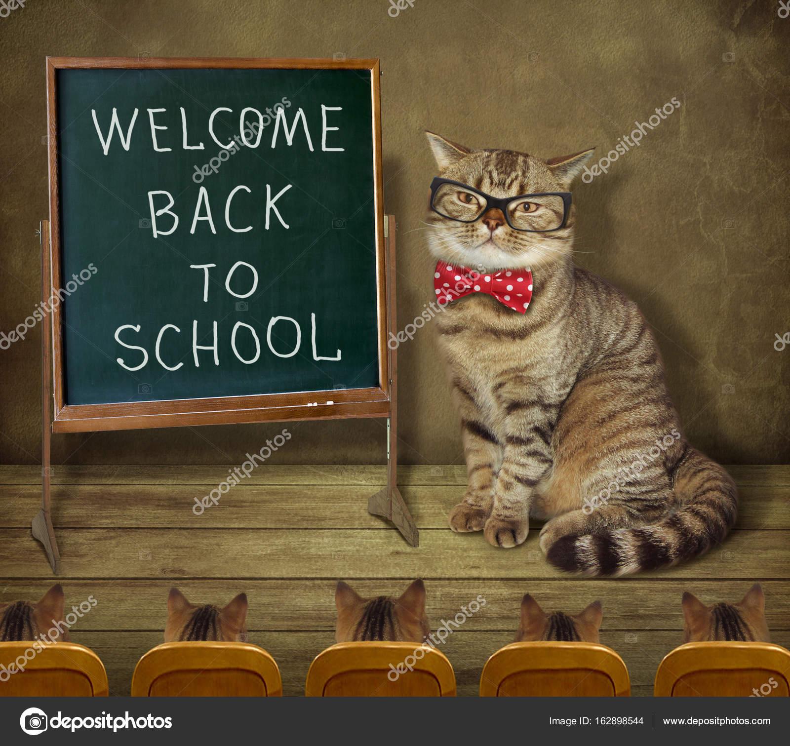 黒板 2 の猫先生 — ストック写真