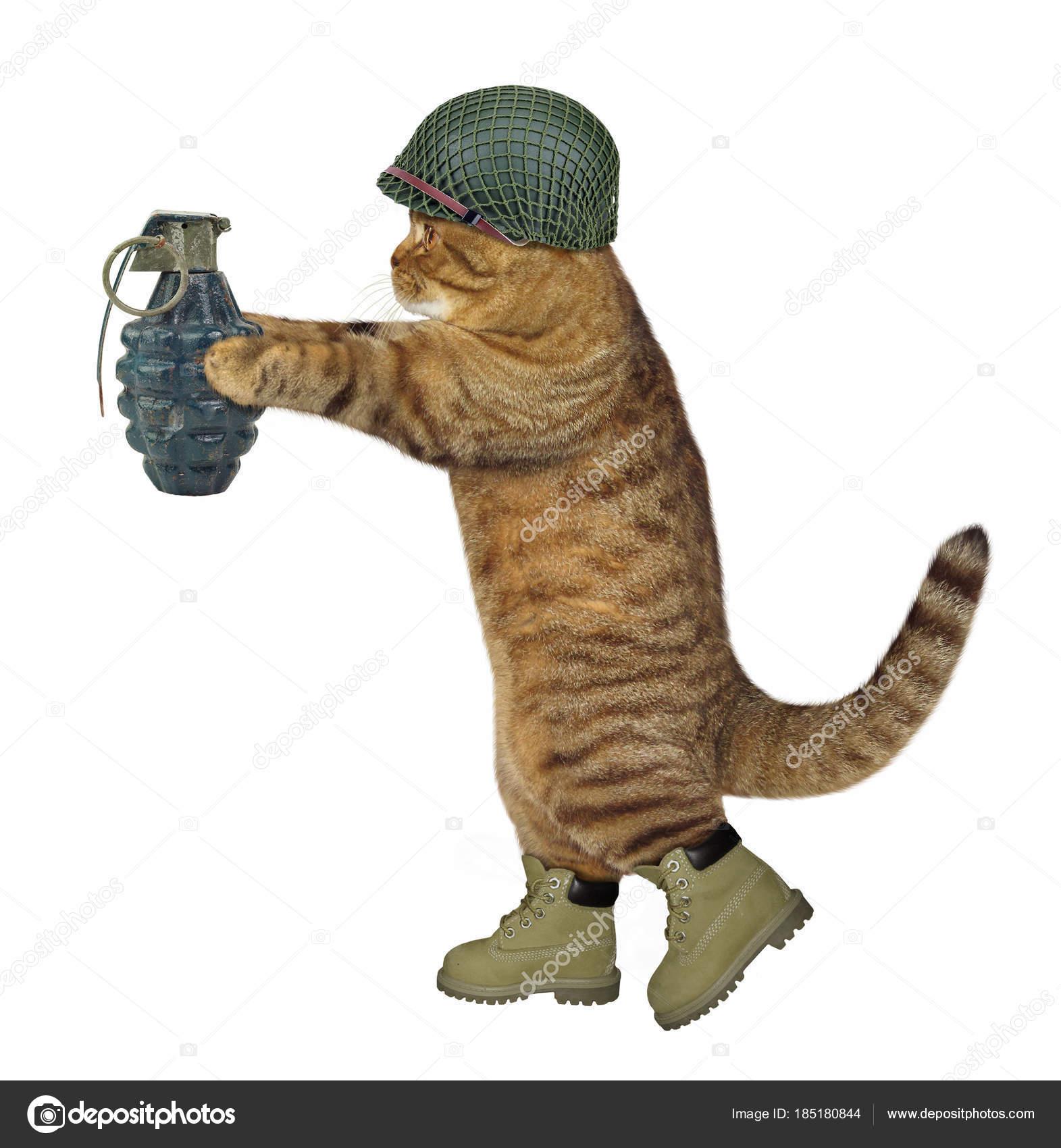 https://st3.depositphotos.com/7863750/18518/i/1600/depositphotos_185180844-stock-photo-cat-soldier-with-grenade-2.jpg