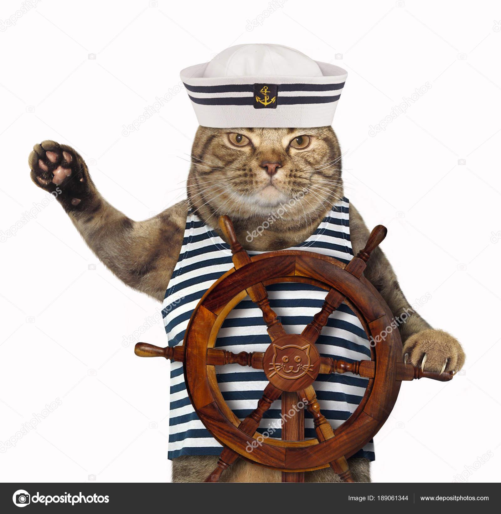 72f5825fac91e Gato en el sombrero del marinero — Fotos de Stock © Iridi  189061344