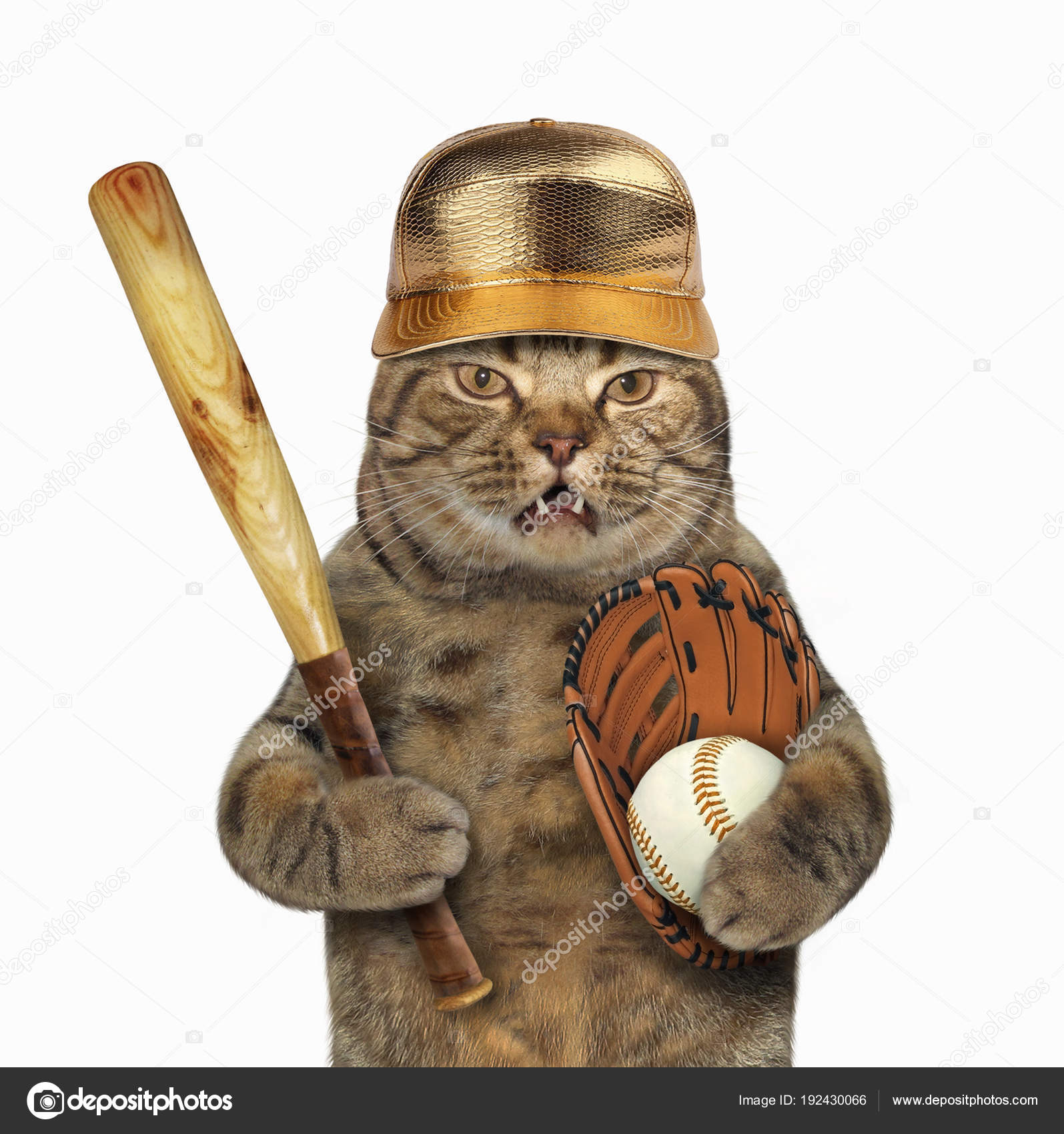 692a8f6e3 Gato com taco de beisebol — Fotografias de Stock © Iridi  192430066