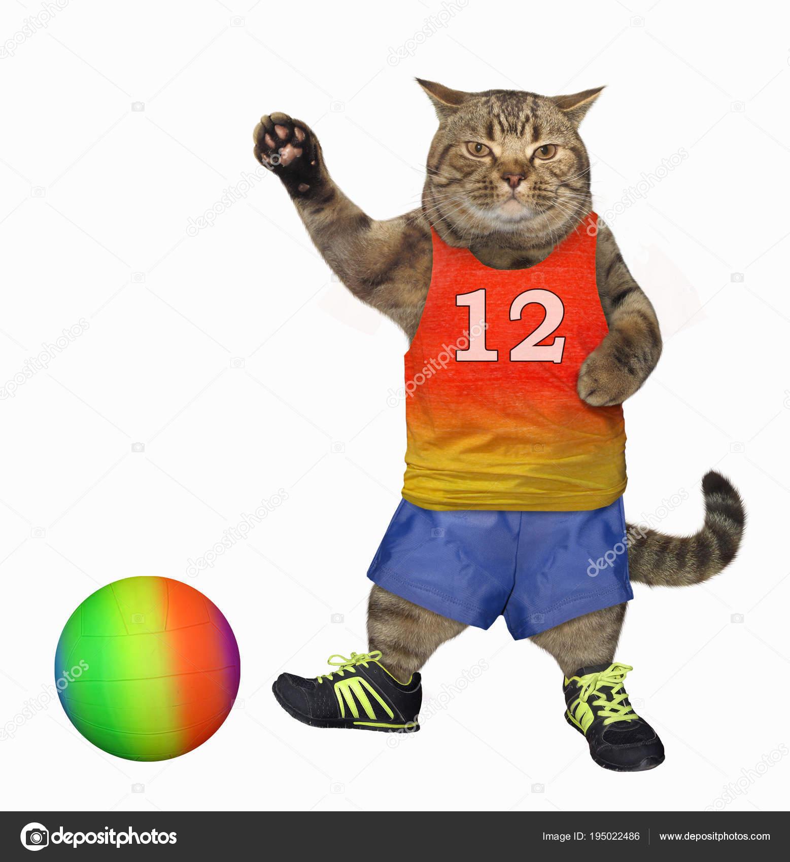 cat sokker