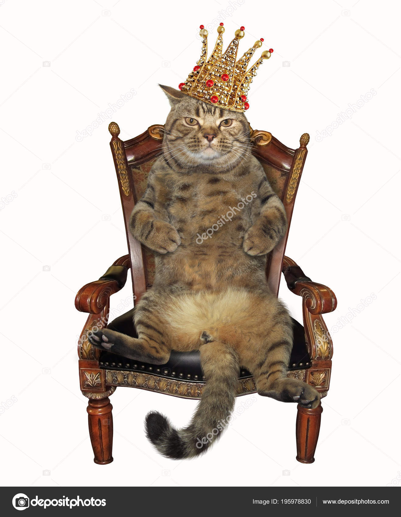 Cat Crown Sits Antique Armchair White Background U2014 Stock Photo