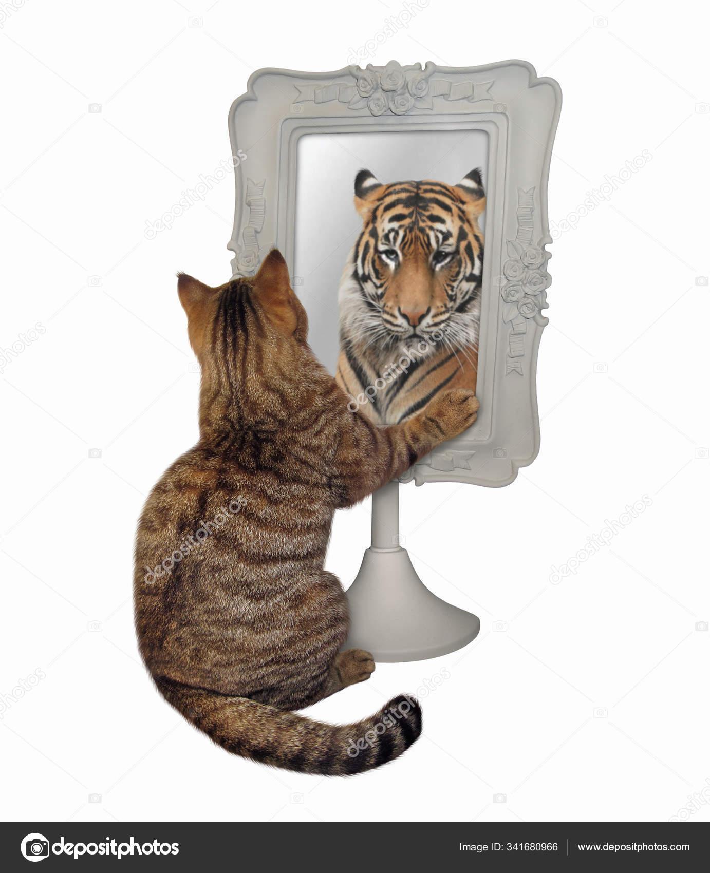Mirror cat lion Luigi the