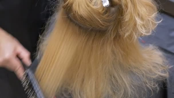 A stylist barber combs her hair to a blonde woman using a hairdryer.
