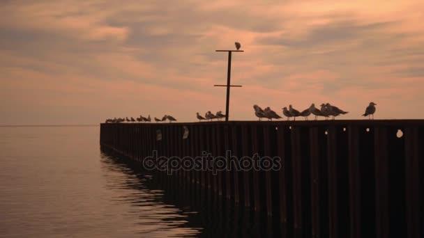 Rackové sedět na molu. Moře molo s racky při západu slunce. Racek pier