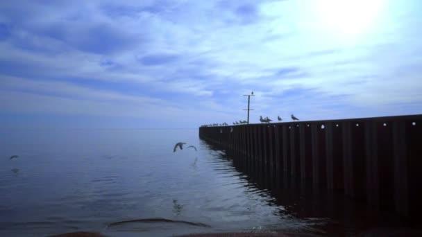Rackové na námořní mola v soumraku. Modrá obloha na moři slunce. Racky na moři molo
