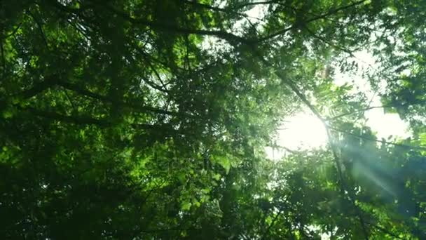 Green tree bottom view. Green trees with leaves and sunlight