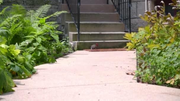 Farm rabbit at summer day. Little rabbit near the stairs. Domestic rabbit