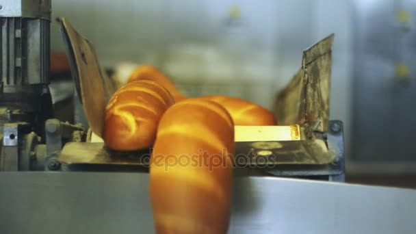 Loaf of bread on conveyor belt. Production line at bread plant Bread factory