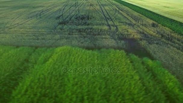 Zelená zemědělské oblasti. Kolo trasování zemědělské vozidla na sklizeň pole